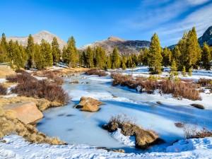 Bosque de pinos junto a un río congelado
