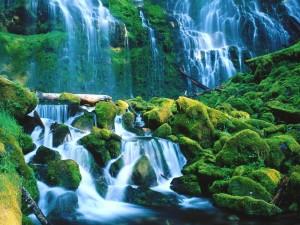Cascadas en el bosque nacional Willamette (Oregón)