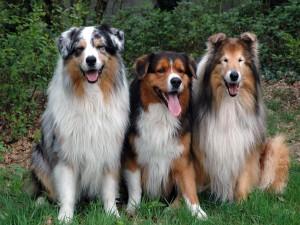 Bonitos perros muy atentos