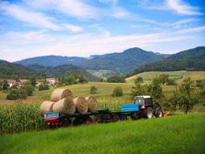 Granjero transportando pastura para sus animales en el campo