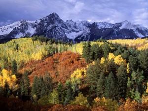 Bosque bajo las montañas