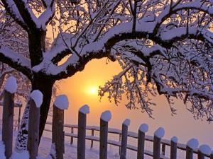 Cerca de madera y árboles nevados al amanecer