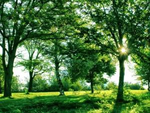 Exuberante vegetación en un día de verano