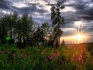 Flores y árboles en el ocaso del sol