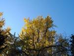 Árboles con hojas doradas en otoño
