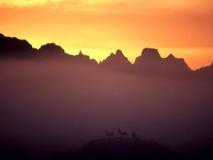Ciervos bajo las montañas al amanecer