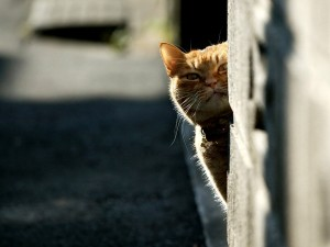 Gato asomando la cabeza