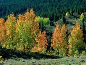 Cabaña entre los árboles