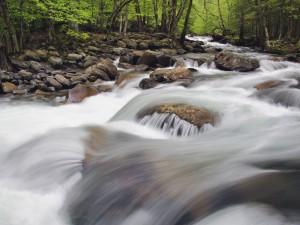 El cauce del río