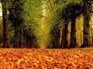 Alfombra de hojas de otoño en el parque
