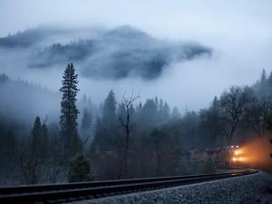 Tren entre la niebla del bosque