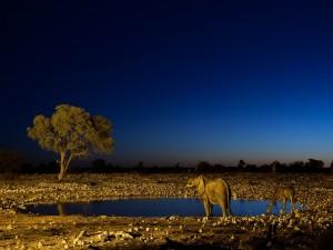 Elefante y jirafas en el Parque Nacional de Namibia