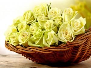 Rosas amarillas en un cesto de mimbre