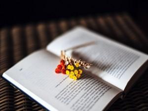 Flores silvestres sobre un libro