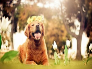 Un perro con flores en la cabeza