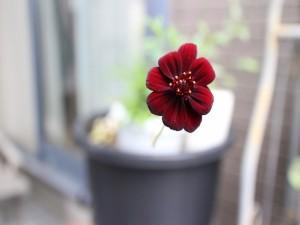 Hermosa flor aterciopelada