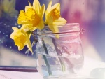 Narcisos amarillos en un bote de cristal