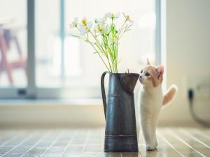 Gato observando las flores del jarrón