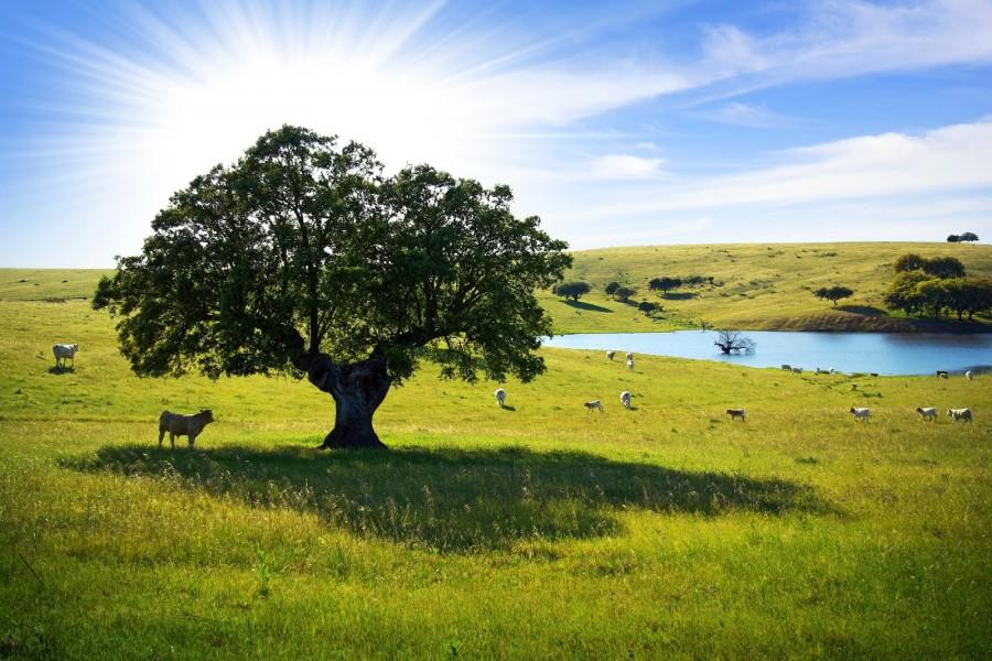 Vacas en los pastizales comiendo bajo la sombra de un frondoso árbol