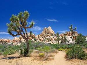 Paisaje desértico con arbustos y rocas