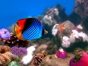 Fondo marino con corales, arrecifes y peces de colores