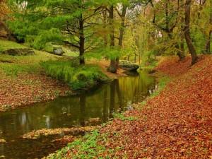 Riachuelo cruzando el bosque en otoño