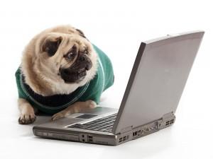 Perro mirando la computadora portátil