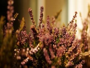 Florecillas en el arbusto