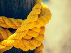 Cuerda amarilla enrollada a un tronco