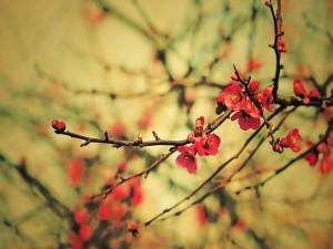 Pequeñas flores en las ramas