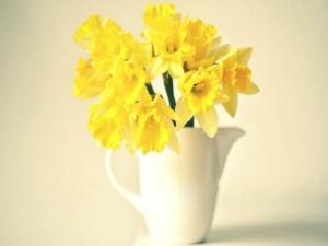 Narcisos amarillos en un jarrón