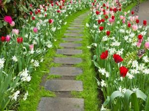 Camino con hermosas flores