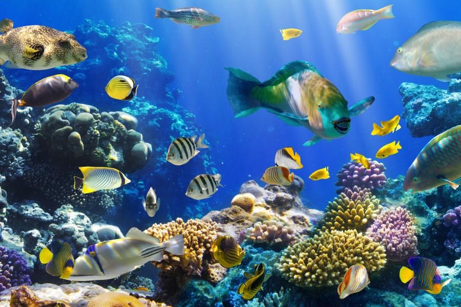 Peces de colores en el fondo marino