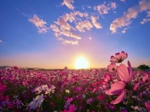 Los rayos del sol iluminan un campo con radiantes flores silvestres