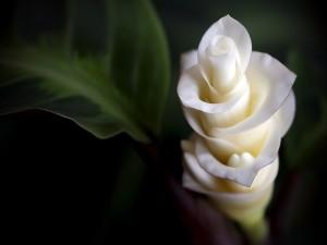 Hermosa flor de pétalos blancos