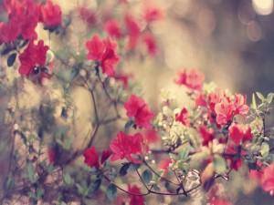 Flores y hojas en las ramas