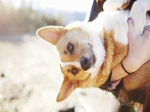 Perro entre los brazos de una mujer