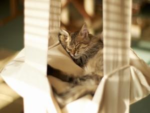 Un gato dormido en una hamaca