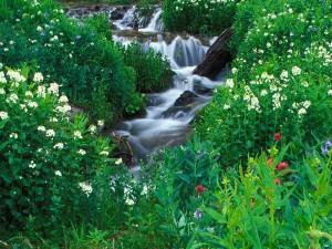 Riachuelo fluyendo en primavera