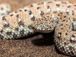 Bonita serpiente sobre la arena