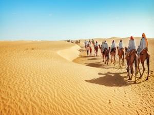 Camellos en caravana