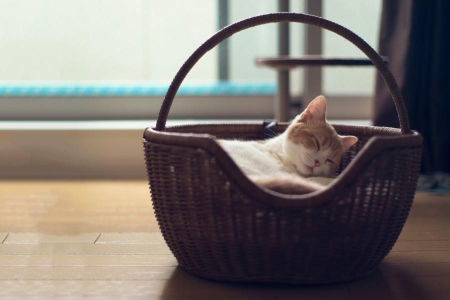 Gatito durmiendo en una cesta de mimbre