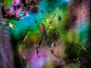 Araña en su tela