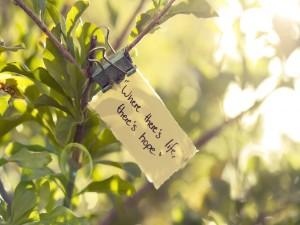 """Nota colgada de una rama: """"Donde hay vida, hay esperanza"""""""