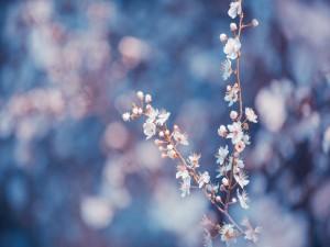 Rama con pequeñas flores blancas