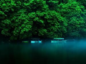 Botes en un río a orillas de una selva tropical