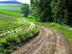 Carretera atravesando los campos primaverales