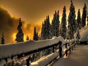 Vallas y pinos cubiertos de nieve