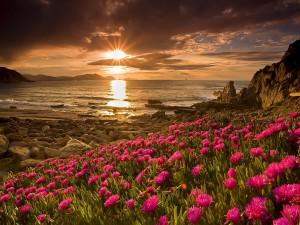 Flores en la playa rocosa