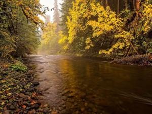 Río fluyendo en calma por el bosque